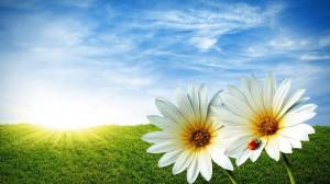 summer-flowers-msc